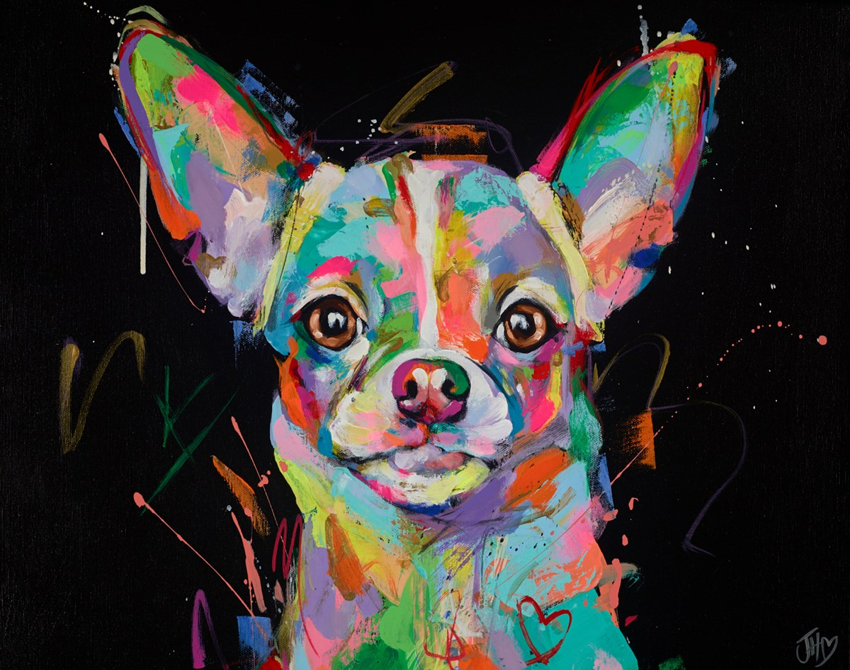 Luminous Chihuahua
